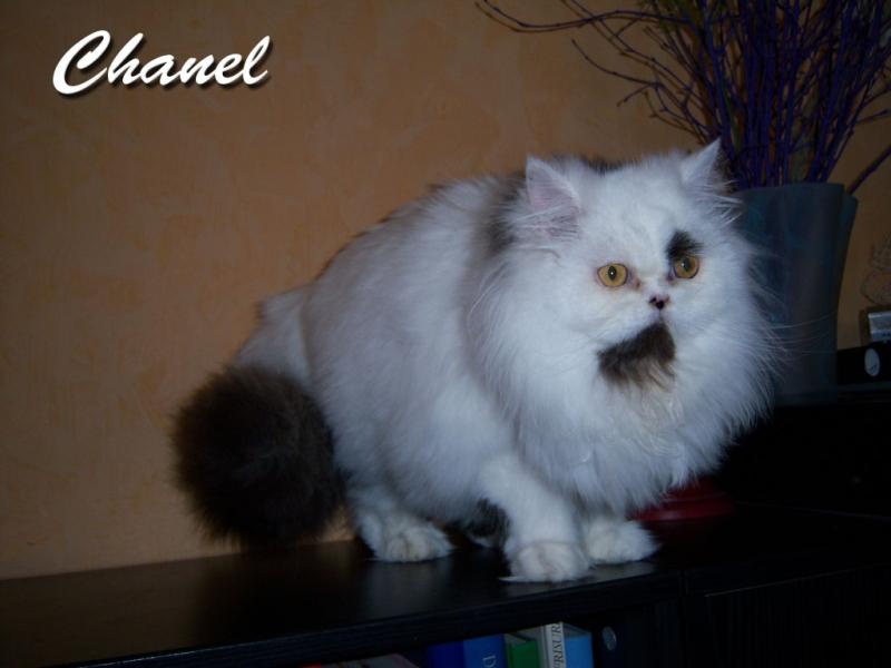 Chanel hat ein neues Zuhause in Jena gefunden
