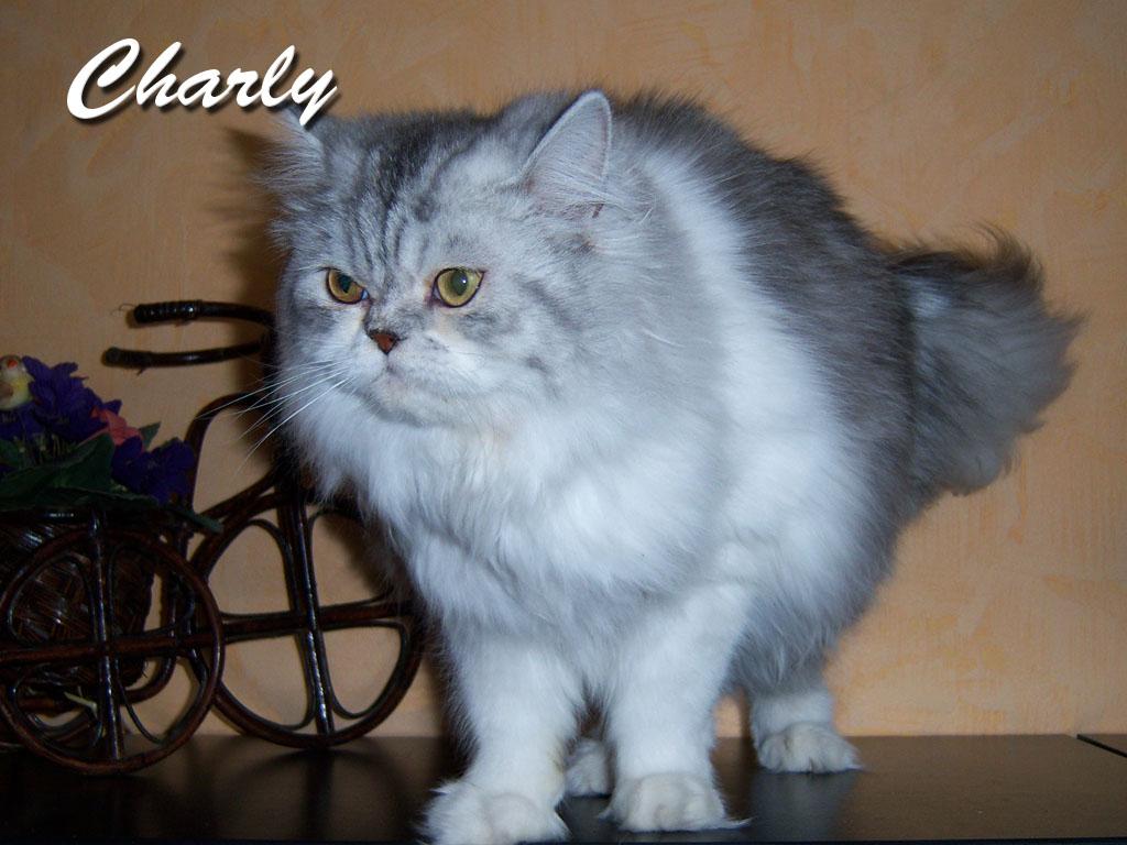Charly hat ein neues Zuhause in Zella-Mehlis gefunden