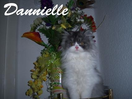Dannielle hat ein neues Zuhause in London gefunden