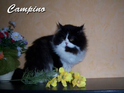 Campino hat ein neues Zuhause in Erfurt gefunden