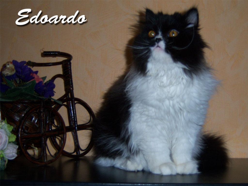 Edoardo hat ein neues Zuhause in Suhl gefunden