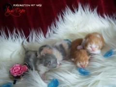 Kitten 2013